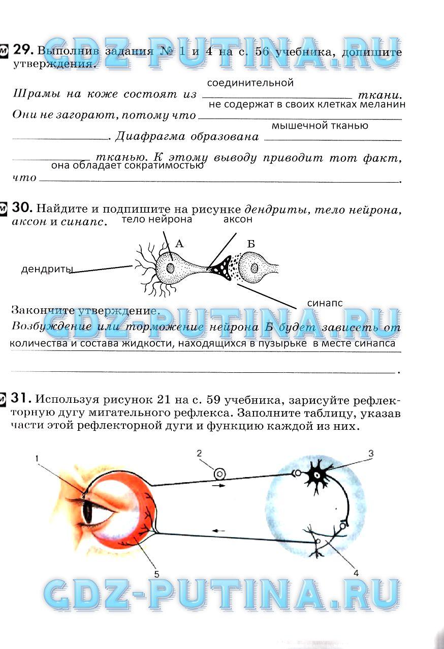 Колесов биология кл. рабочая тетрадь гдз