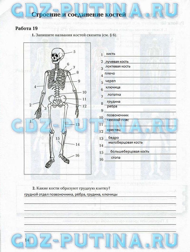 Биология рабочая тетрадь 8 класс ответы маш и драгомилов